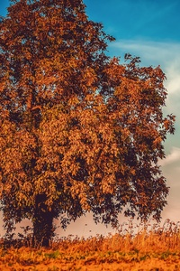 Autumn Tree Branches 4k