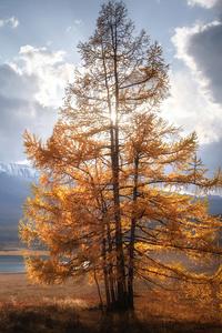 1440x2560 Autumn Tree Sunlight Mountains Clouds 5k