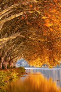 1440x2960 Autumn Trees Orange Lake 5k