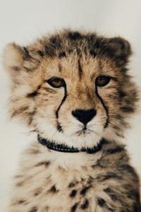 Baby Cheetah 5k