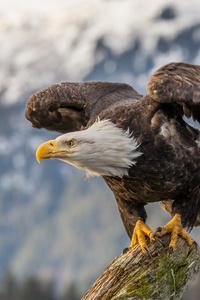 1080x2280 Bald Eagle 4k