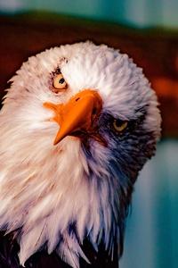 Bald Eagle 5k