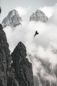 1080x2160 Bald Eagle Flying Through Clouds And Mountains 4k