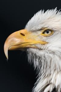 1280x2120 Bald Eagle Wild