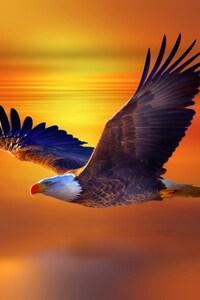 640x1136 Bald Eagle