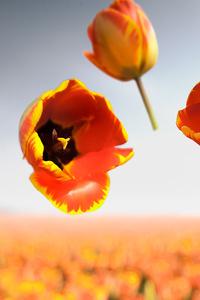 1080x2160 Banja Luka Flowers