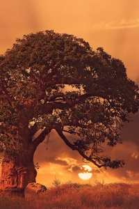 320x480 Baobab Tree Sybset