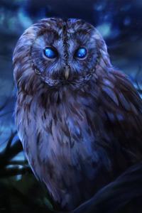 240x320 Bared Owl
