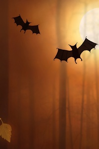 Bats Night Moon Trees Fallen Leaves