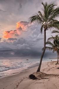 Beach Summer Ocean Trees Wind Flowing