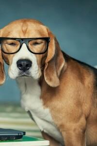 640x1136 Beagle Funny