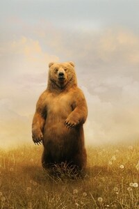 640x1136 Bear In Field