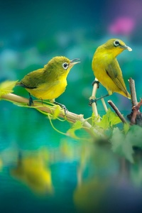 320x568 Beautiful Birds