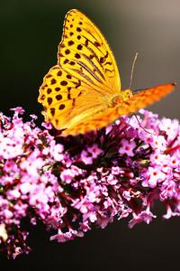 360x640 Beautiful Butterfly 4k