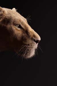 1125x2436 Beyonce As Nala The Lion King 2019 5k
