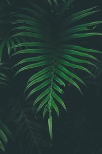 Big Leaves Cool Temperature 5k
