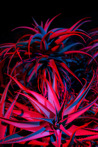 640x1136 Big Sur Night Succulents 5k