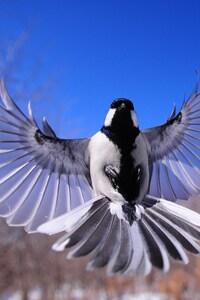 480x800 Bird Flapping Wings