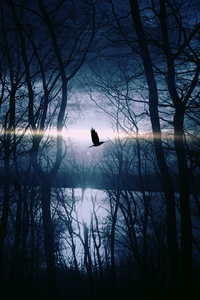 Bird Flying Forest Woods Silhouette