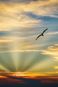 Bird Flying Sunset Evening View Clouds Beautiful Sky 5k