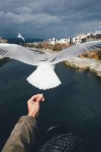 1080x2280 Bird Freedom