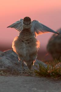 480x800 Bird In Joy