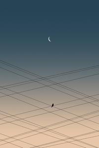 480x800 Bird On Power Lines