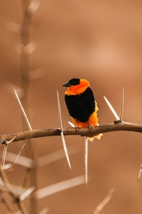 1080x2160 Bird Photography
