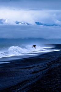 Bird Sea Flight 5k