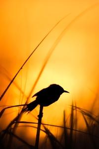480x854 Bird Silhouette 4k
