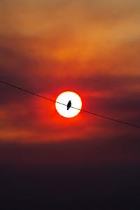 1280x2120 Bird Silhouette Sunset 4k