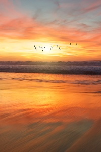 1080x2160 Birds Flying Over Beach 4k