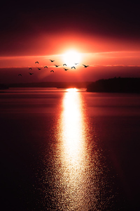 1440x2960 Birds Flying Over Body Of Water 4k