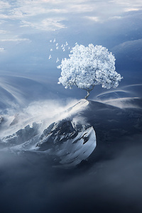 Birds Flying Over Snow Tree On Mountain Peak