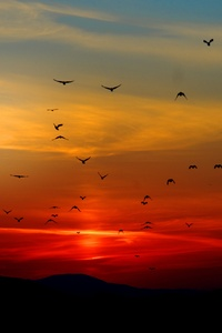 Birds Flying Towards Sunset 4k 5k