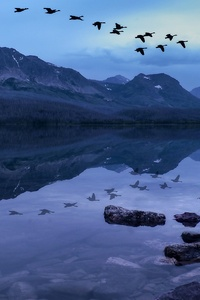 1080x2160 Birds Mountains Stones Evening Lake