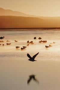 Birds Seashore 5k