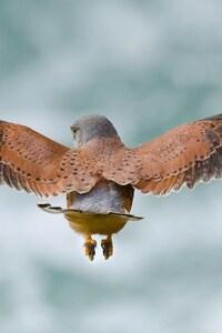 1080x2160 Birds Wings