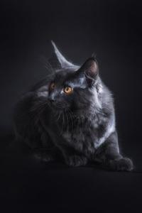 Black Cat 5k