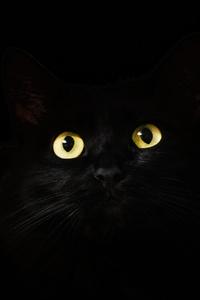 1080x2280 Black Cat Eyes Dark 5k