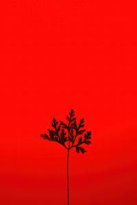 1242x2688 Black Leaf Red Background 5k