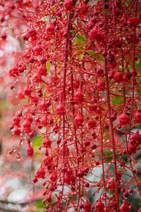 1440x2960 Blossom Bokeh Garden
