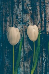 320x480 Blossom Flora Flowers