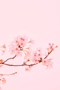 720x1280 Blossom Flower Plant 5k