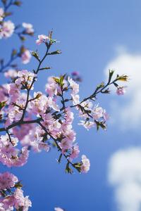 1080x2280 Blossom Flowers 5k