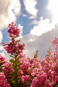 1080x1920 Blossom Flowers Field 5k