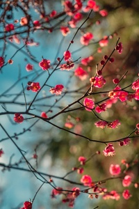 1080x2160 Blossom Petal Flowers 8k