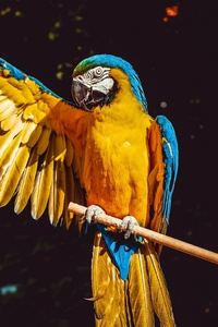1080x2160 Blue And Yellow Macaw 5k