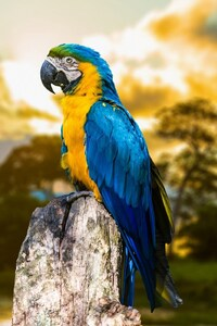 240x320 Blue And Yellow Macaw