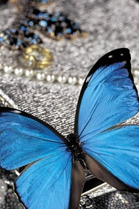 480x854 Blue Butterfly On Pearls